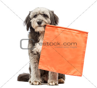 Crossbreed, 4 years old, sitting and holding an orange flag in its mouth in front of white background