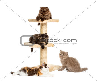Kittens playing on a cat tree