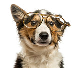 Close-up of a Border collie with old fashioned glasses, isolated