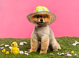dog, colored hat, sitting in grass with flowers and chicks