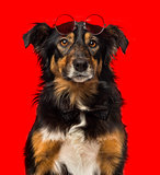 Close-up of a Border collie with red round sunglasses