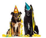 Two depressives dogs wearing party hat and sitting in serpentine