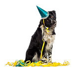 Border Collie wearing a party hat and sitting in serpentines