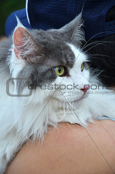 Close up of adorable black and white color cat