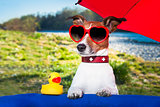 summer dog under umbrella