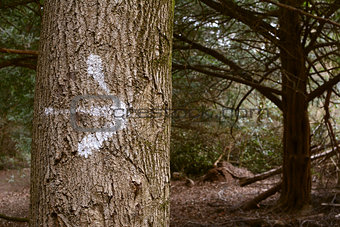 Arrow painted on a tree trunk in the forest