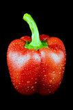 Red sweet pepper