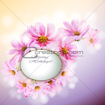 Cosmos flowers background.