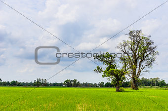 Green grass tree and sky