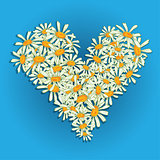 Heart flowers camomile