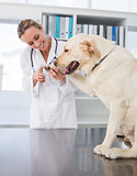 Dog getting claws trimmed by vet