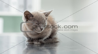 Kitten in veterinary office