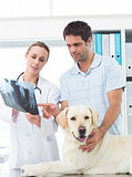 Vet and pet owner discussing Xray of dog