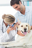 Veterinarian examining ear of dog with man