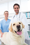 Veterinarians with dog in clinic