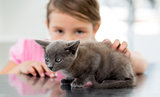 Girl with kitten at veterinary office