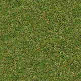Spring Grass. Seamless TileableTexture.