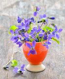 violets flowers (Viola odorata)