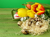 Easter still life with spring flowers tulips and quail eggs on a wooden background