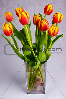 Beautiful orange red tulips on grey background