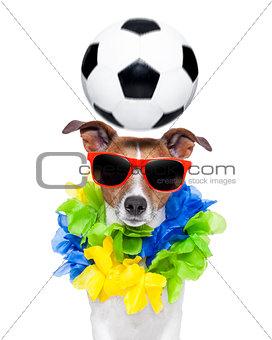 brazil funny soccer dog
