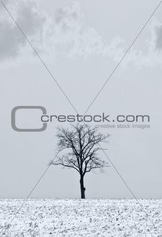 Single tree
