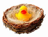 Yellow Ducky in Nest