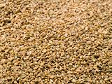 Dried Celery Seed Background