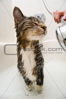 Cat in the shower