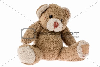 Cute Teddy Bear.