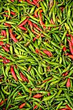 indonesian chillies