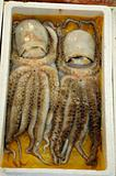 Octopus Twins