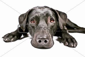 black dog looking sad