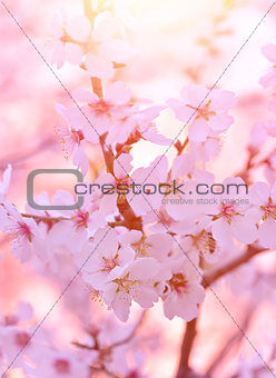 Beautiful blooming tree