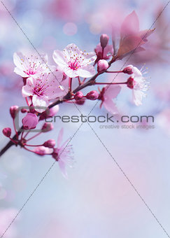 Springtime blooming tree background
