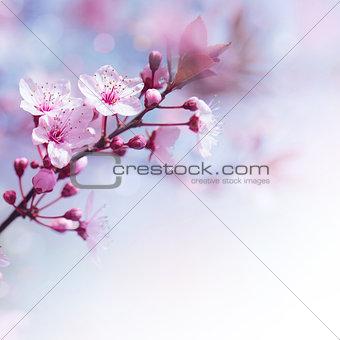 Fresh cherry flowers border