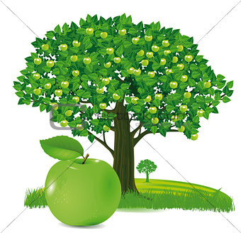 Apple with apple tree