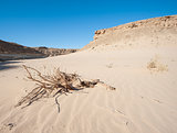 Small dead desert bush on a sand dune slope