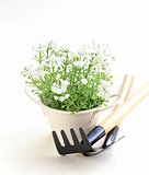 pot plant with garden tools on a white background