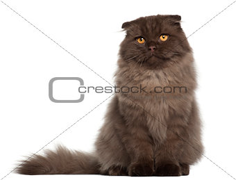 Portrait of Scottish Fold cat, 5 months old, sitting in front of white background