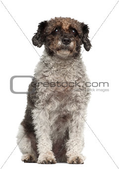 Cross breed sitting in front of white background sitting against white background