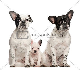 French bulldogs with puppy, 4 weeks old, sitting against white background