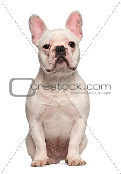 French Bulldog, 7 months old, sitting against white background