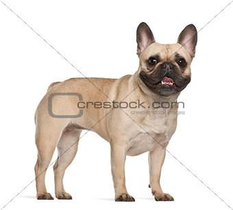 French Bulldog, 2 years old, standing against white background