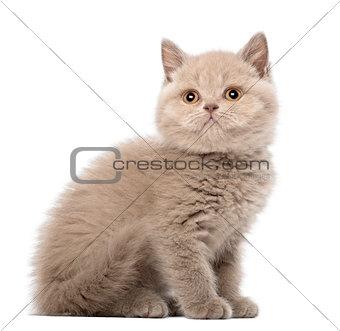 British Shorthair Kitten sitting, 9 weeks old, against white background