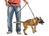 Man holding leash of aggressive Belgian Shepherd against white background