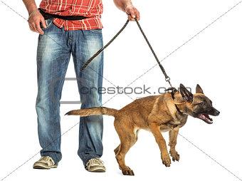 Man holding leash of aggressive Belgian Shepherd against white background