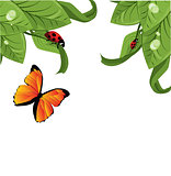 Ladybird on leaf, vector illustration,