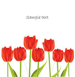 red tulip spring card