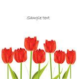 red tulip spring card